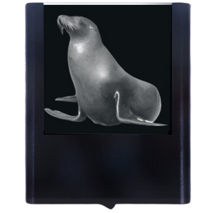 Night Light Sea Lion 1