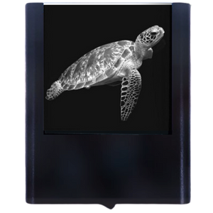 Load image into Gallery viewer, Night Light Sea Turtle