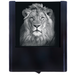 Night Light Lion
