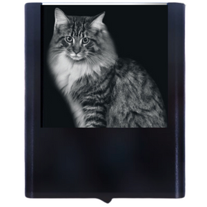 Load image into Gallery viewer, Night Light Billy Cat