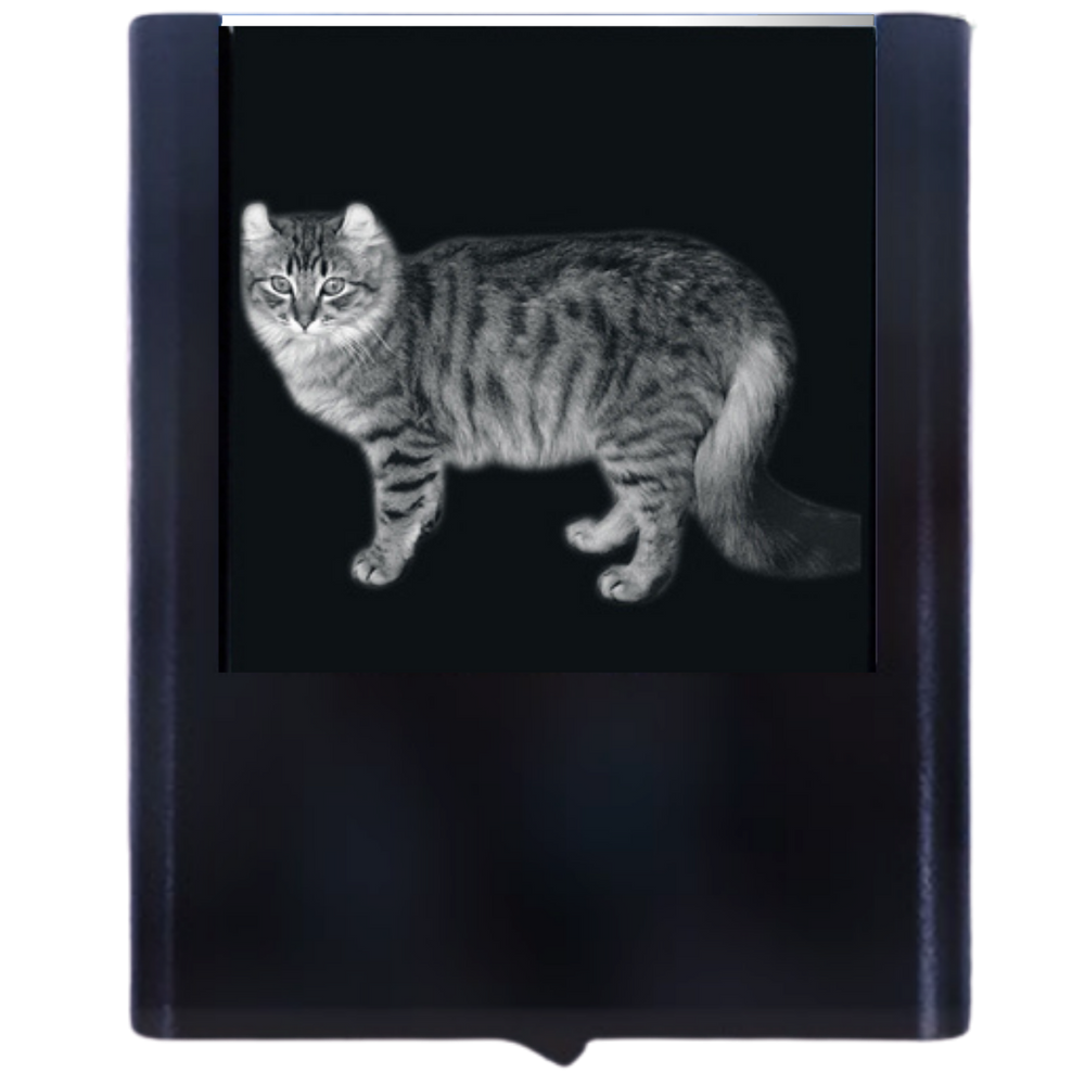 Night Light American Curl Cat
