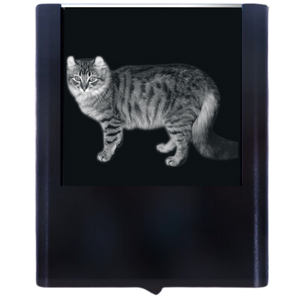 Load image into Gallery viewer, Night Light American Curl Cat