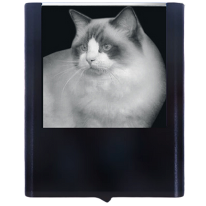 Night Light Ragdoll Cat