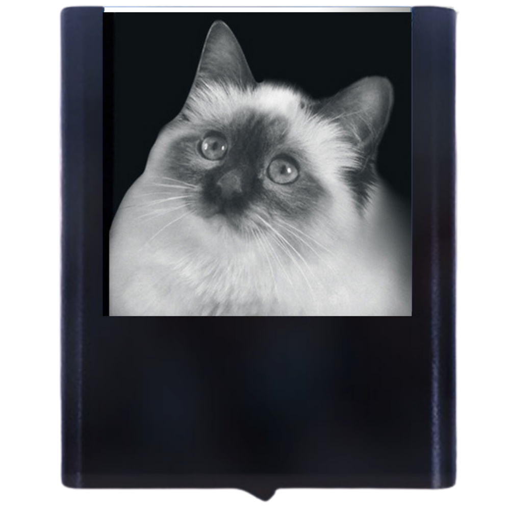 Load image into Gallery viewer, Night Light Persian Cat