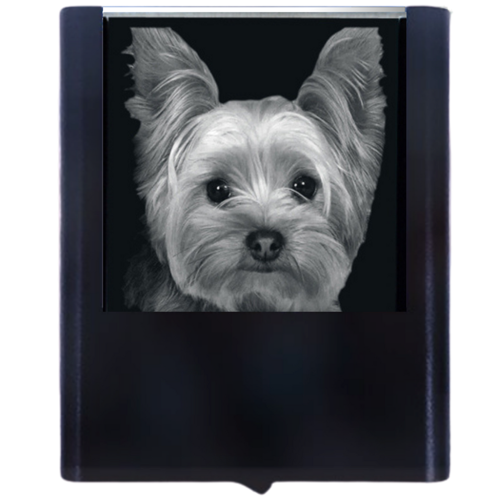 Night Light Yorkshire Terrier