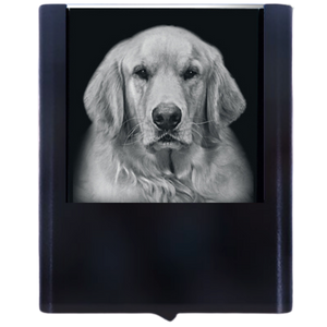 Load image into Gallery viewer, Night Light Golden Retriever