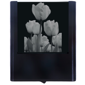 Night Light Tulips