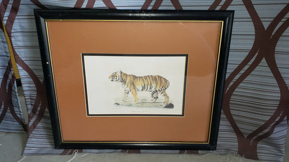 Framed Tiger Print - Macomb County ReStores