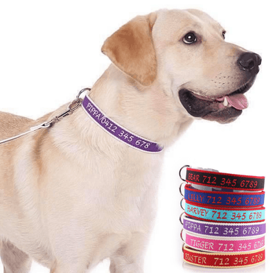 Embroidered Organic Bamboo - Personalised Dog Collar: CHOICE of METAL or PLASTIC BUCKLE