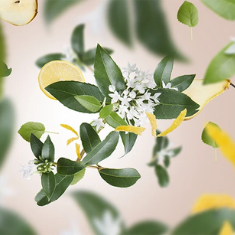 Delicate Osmanthus
