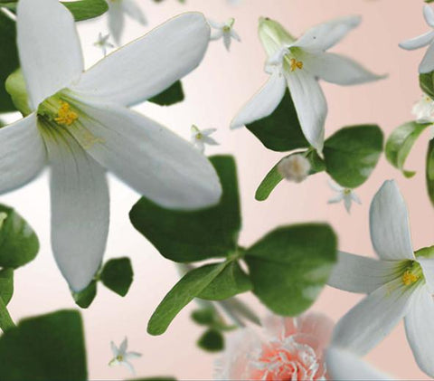 Jasmine essential oil, aids in pain relief for chronic pains, menstrual pain cramps