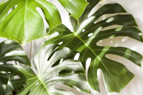 Top 5 Easy Care House Plants For Beginners