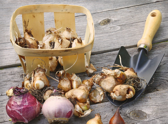 Bulbs and Seeds