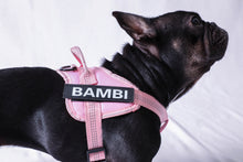 "Load image into Gallery viewer, Image description: black French bulldog wearing pink harness with name attached, spelling ""Bambi."""