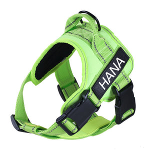 Image description: green harness with personalized name tag