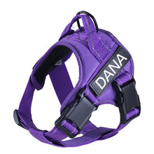 Load image into Gallery viewer, Image description: purple harness with personalized name tag