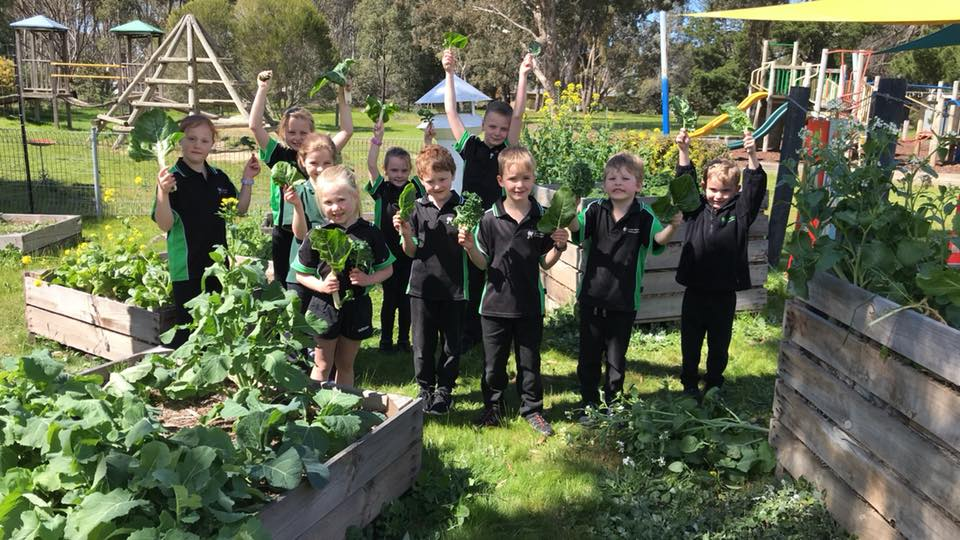 Great Western Primary School's Harvest