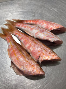 Headless Baby Red Mullet