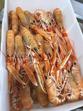 Load image into Gallery viewer, Large Langoustines