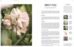 SEED Magazine-Boutique Mags