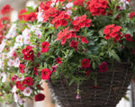 Load image into Gallery viewer, Spring Hanging Basket