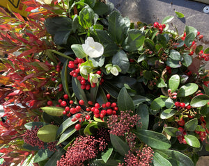 Autumn Winter Flowering Shrub Box