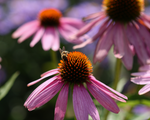 Load image into Gallery viewer, Elite Spring/Summer Perennials