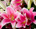 Load image into Gallery viewer, Exotic Lillies