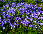 Load image into Gallery viewer, Spring Flowering Bulb Box