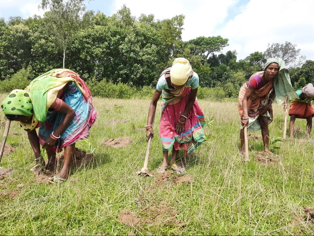 Unnaaty, Trees For Tiger Reforestation Project In India