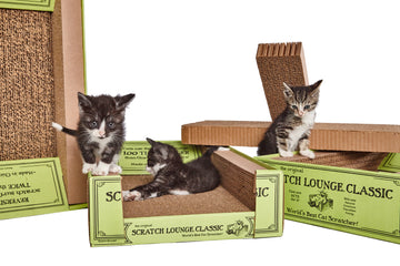 BIG BOX: 6 Scratch Lounges buy the case: Discount! - scratchlounge.com