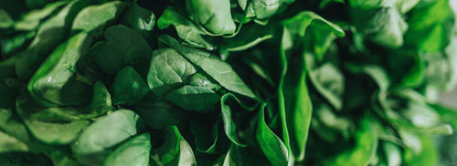 Fresh spinach close up