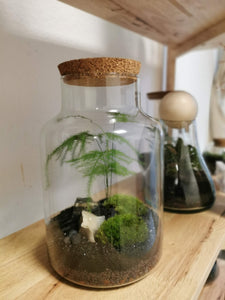 Terrarium M - Jungle 210110