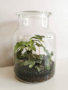 Terrarium M - Jungle 210306
