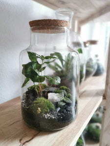 Terrarium M - Jungle 210326