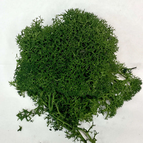 Forest Reindeer Moss, Bagged 1 Oz