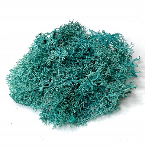 Light Blue Reindeer Moss, Bagged 1 Oz