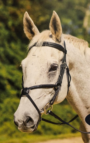 Shires Avignon Woodside Bridle