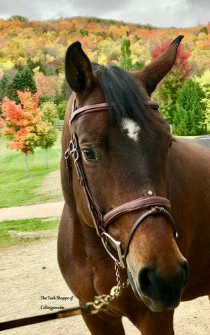Antarès Origin Hunter Bridle with removable flash noseband Brown Fancy Stitch