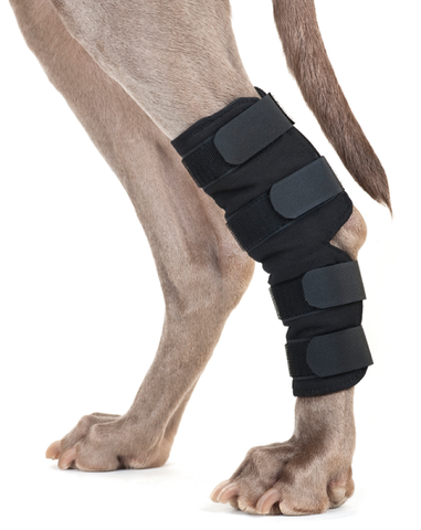 Back On Track Dog Hock Brace, pair - with 4 Self Fastening Straps
