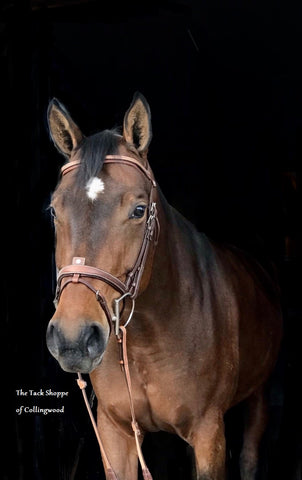 ANTARES GRAINED FLASH NOSEBAND BRIDLE (WITH REINS)