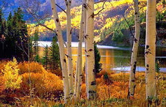 Fall in Vail, CO