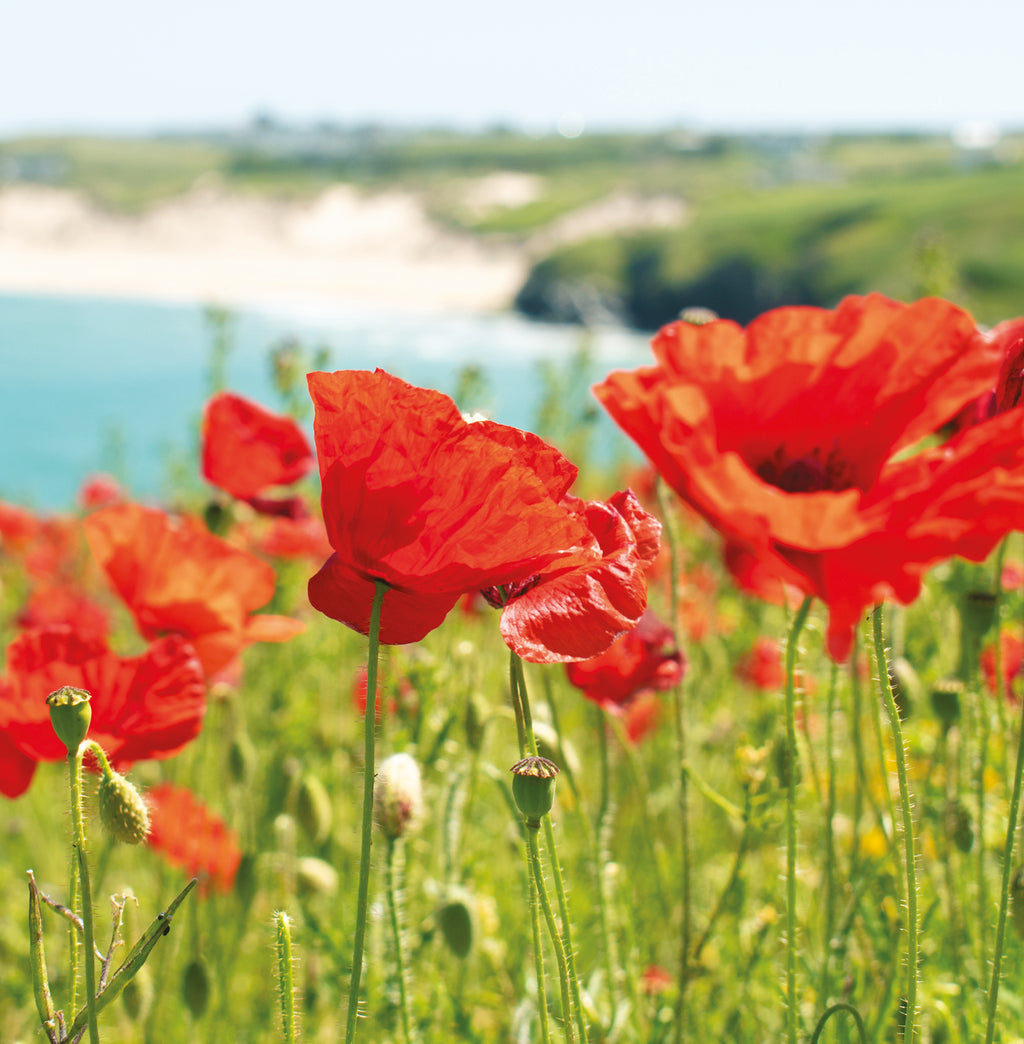 Poppies at West Pentire, Happy Birthday card