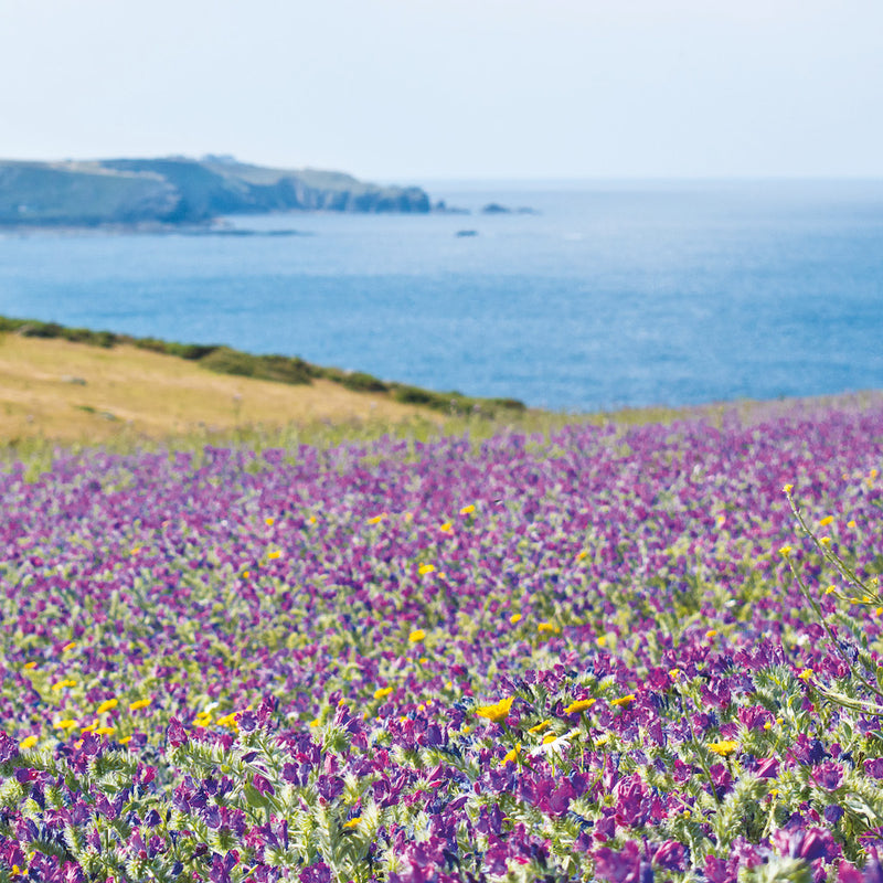 Wildflower Fields, Land's End