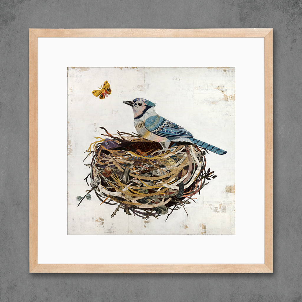 Blue Jay in Nest Bird Art Print