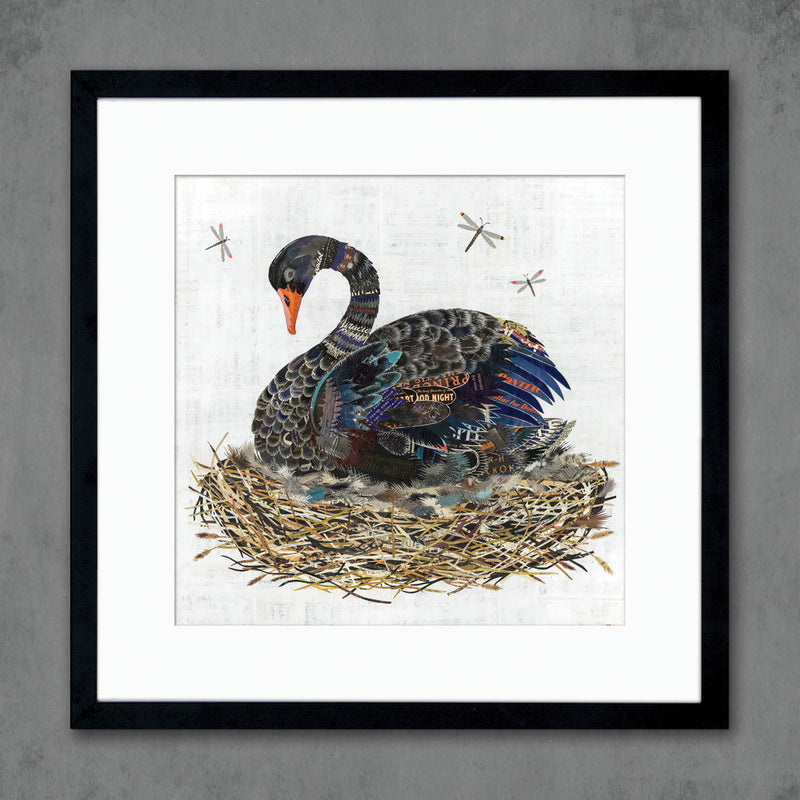 main image for Black Swan in Nest Art Print