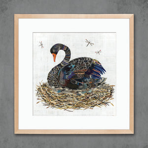 thumbnail for Black Swan in Nest Art Print