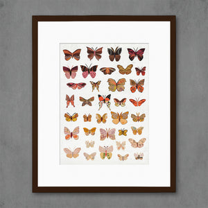 thumbnail for Dawn Butterflies Art Print