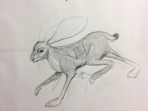 thumbnail for Original Jackrabbit and Cacti Drawing