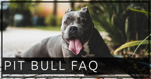The Pit bull FAQS